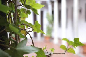 home_granada_patio_plantas_desenfoque